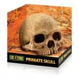 Exo Terra Terrarium Decor - Primate Skull