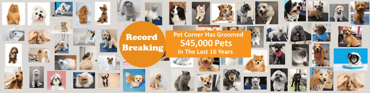 RECORD BREAKING 545,000 GROOMINGS